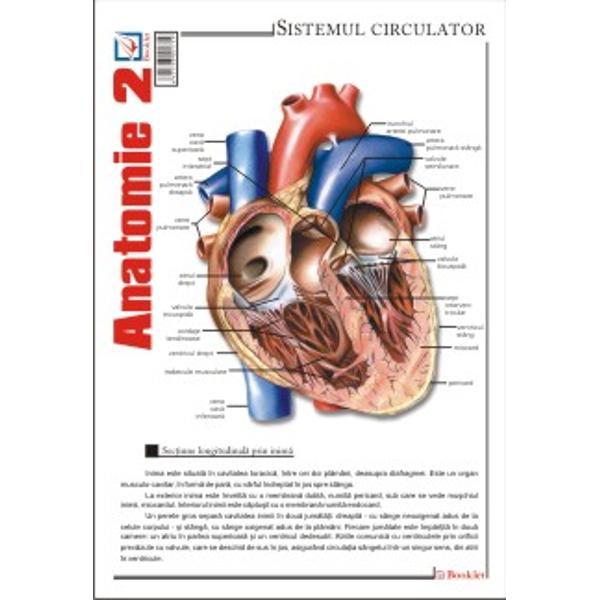 Plansa de Anatomie 2 contine reprezentari ale sistemului circulator; sistemului limfatic; sistemului respirator