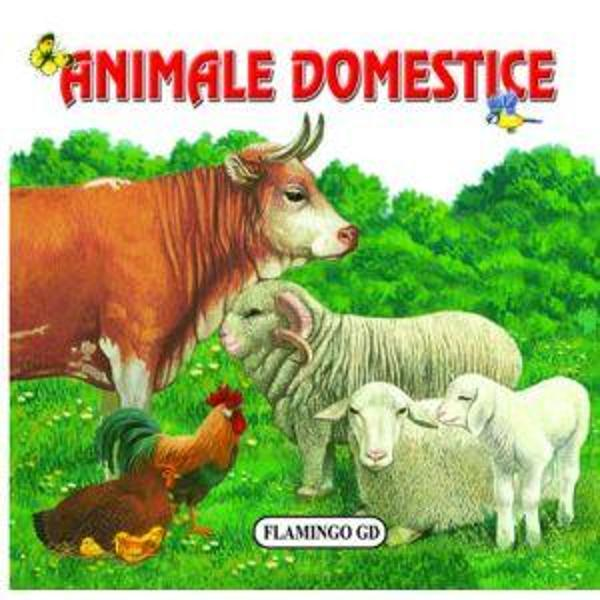 Animale - cartonat