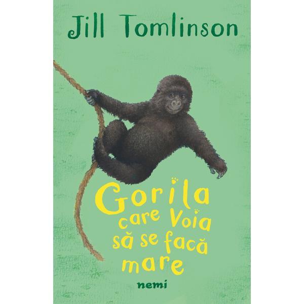 Pongo este un pui de gorilaii place la nebunie sa se joacese leagana din liana in liana&537;i urca &537;i coboara din copaciPongo este un pui de gorila foarte jucau&537;Traie&537;te in