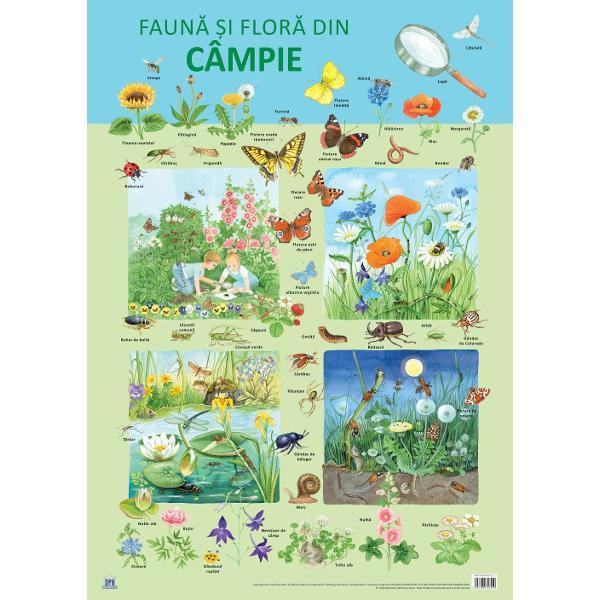 Plansa fauna si flora din campie