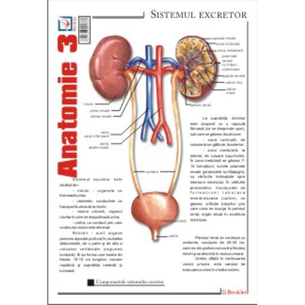 Plansa de Anatomie 3 contine reprezentari si notiuni teoretce ale sistemului excretor; sistemului reproducator