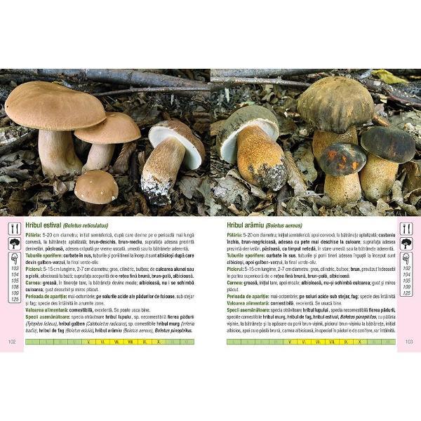 Aceast&259; carte con&539;ine prezentarea a 555 specii de ciuperci 371 cufotografii color cu care ne putem întâlni în timpul drume&539;iilor noastreprin p&259;duri &537;i pe câmpuri• Ciupercile sunt prezentate în mediul lor natural cu eviden&539;iereacaracteristicilor lor principale• Pictogramele de pe coper&539;ile interioare ale c&259;r&539;ii ajut&259; la identificarea&537;i diferen&539;ierea