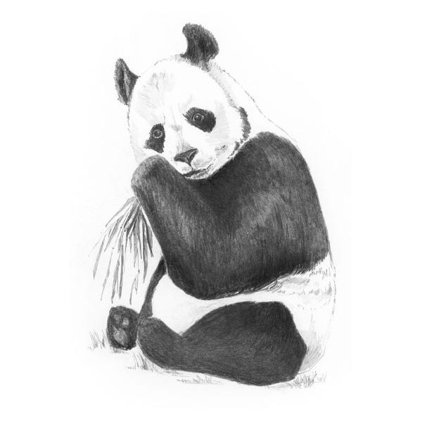 Crochiu incepatori PandaPrin acest setcrochiu incepatori Panda te invitam sa pasesti cu incredere in aceasta lume inedita a hobby-ului Urmand pasii din ghidare acest set iti va reda un succes Schitarea ajuta la dezvoltarea unor diferite zone ale creieruluiTotodata iti dezvolti capacitatea de a te concentra si de a acorda atentie o abilitate care iti poate fi foarte utila pe tot parcursul vietii si