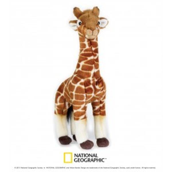 Jucarie din plus National Geografic Girafa 35 cmGirafaeste cea mai inalta din toate speciile de animale Masculii pot avea 48 - 55 m inaltime si o greutate de 900kg Numele ei provine din araba si inseamnacea mai inalta dintre toateSuprafata este lavabilap