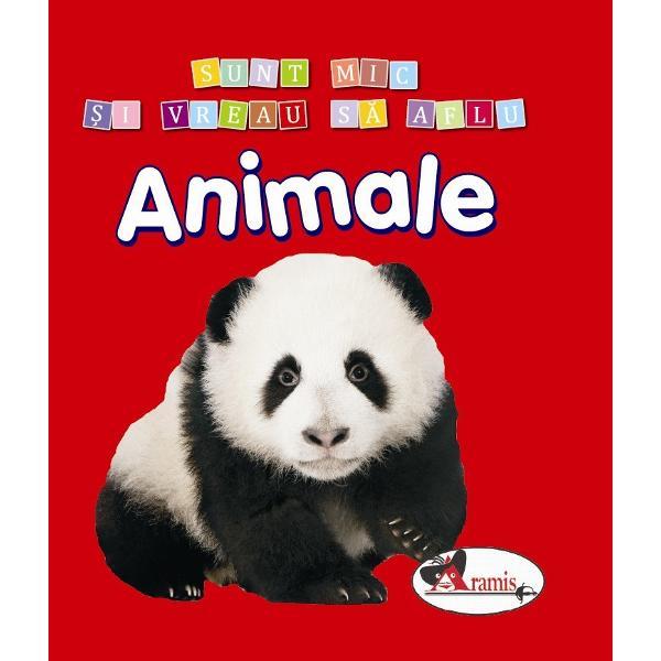Un set de 5 carti minunate pentru copii cu imagini luminoase si pline de culoare cu autocolante si activitati distractive Cartile reprezinta pentru micuti o modalitate foarte buna de a invata si a se amuza in acelasi timp