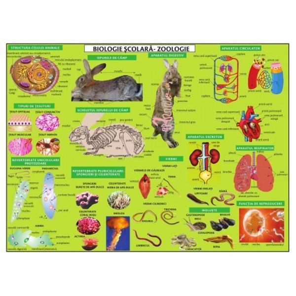 Plansa Biologie scolara - ZOOLOGIE este elaborat&259; în conformitate cu programa scolara in vigoareCu ajutorul aceste planse vei putea vizualiza cu usurintastructura celulei animale aparatul digestiv al iepurelui sau aparatul circulator tipuri de tesuturi dar si exemple de animale nevertebrate antropode crustacee ori insecteanimale vertebrate pesti amfibieni