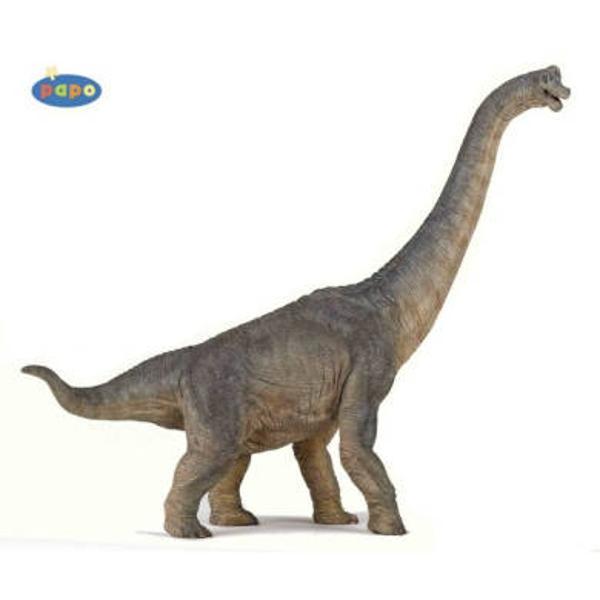 Figurina Papo-Dinozaur BrachiosaurusJucarie educationala realizata manual excelent pictata si poate fi colectionata de catre copii sau adaugata la seturile de joaca cum ar fi animale preistoriceetcNu contine substante toxice Varsta 3 ani