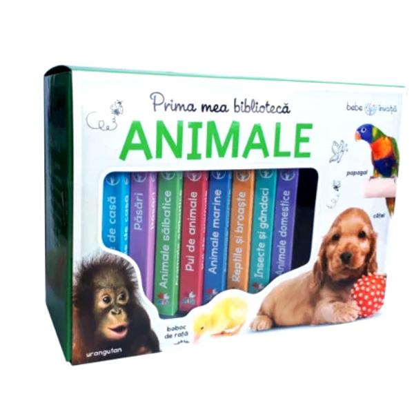 Cutia con&539;ine opt c&259;rticele pe carton ilustrate cu imagini captivante din lumea animalelor Copiii vor fi încânta&539;i s&259; recunoasc&259; &537;i s&259; numeasc&259; animalele cunoscute în timp ce înva&539;&259; s&259; asocieze imaginile cu cuvintele Totodat&259; î&537;i îmbun&259;t&259;&539;esc cuno&537;tin&539;ele &537;i vocabularul cu no&539;iuni &537;i cuvinte noi