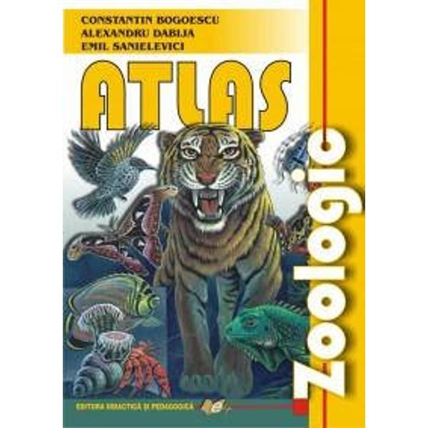 Atlasul zoologic reprezinta&131; un amplu material stiintific adresat elevilor studentilor si profesorilor prezentat intr-o forma&131; grafica&131; deosebita&131; cu ilustratii de calitate atractive si elocvente Este un indruma&131;tor temeinic pentru intelegerea lumii animale a complexita&131;tii si evolutiei ei
