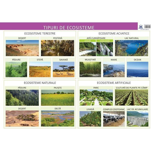 Plansa Tipuri de Ecositeme