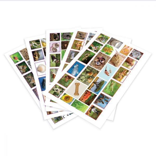 Pentru Baieti FeteVarsta 3 - 4 ani 4 - 5 aniBrand Noriel GamesPrezentare Strabate cutezator regatul animalelor si invata totul despre ele intr-un