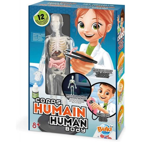 Descopera cele 12 experimente pentru a intelege secretele anatomiei cultiva bacterii asculta-ti inima cu stetoscopul etcUn model al corpului uman cu organe moi usor de disecat si oase fosforescenteGhid de instructiuni in limba romana inclusDimensiuni 25 x 6 x 35 cm L x l x hVarsta recomandata 8 ani